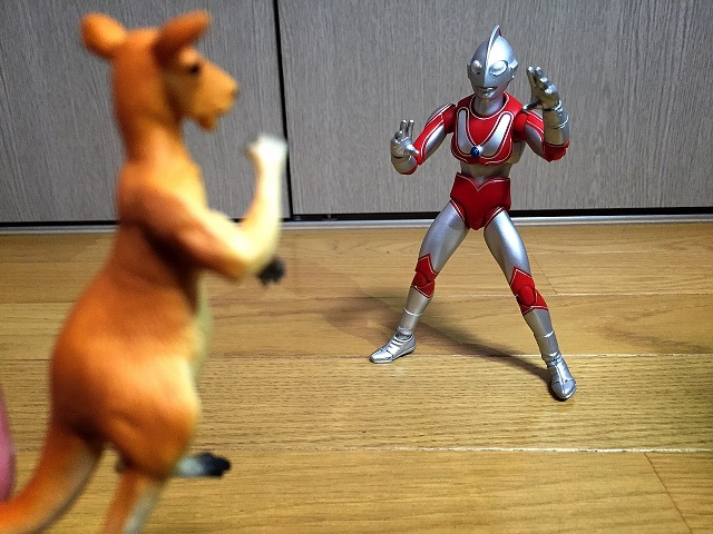 カンガルーと戦うウルトラマン_7586