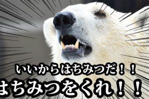 hachimitsu-main2